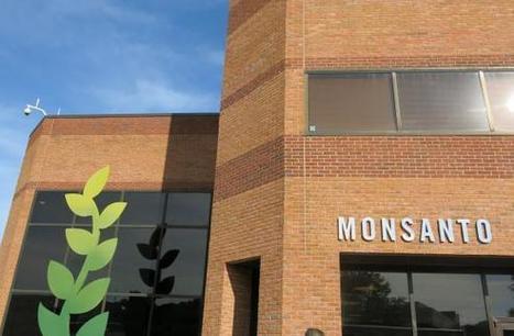 Monsanto, World's Largest Seed Company, Sets Off Corporate 'Feeding Frenzy' | Grain du Coteau : News ( corn maize ethanol DDG soybean soymeal wheat livestock beef pigs canadian dollar) | Scoop.it