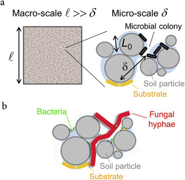Too much or not enough: Reflection on two contrasting perspectives on soil biodiversity | MycorWeb Plant-Microbe Interactions | Scoop.it