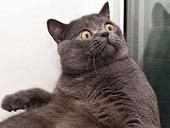 Cat Man Do | Dr. Arnold Plotnick: Leukeran Price Gouging Causes Feline Chemo Cost to Skyrocket | Feline Health and News - manhattancats.com | Scoop.it