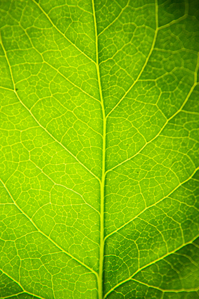 New Energy Innovation in Artificial Leaf Technology | The Energy ... | Neurosciences the fifth science of the decade | Scoop.it