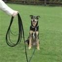 The Rucksack Walk | Modern dog training methods and dog behavior | Scoop.it