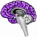 Your Brain & Nervous System | Human Body | Scoop.it