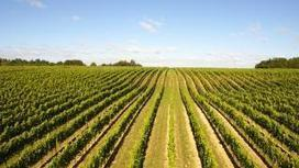 Champagne Pommery crosses the Channel to produce English bubbly   Vitabella Wine Daily Gossip   Scoop.it