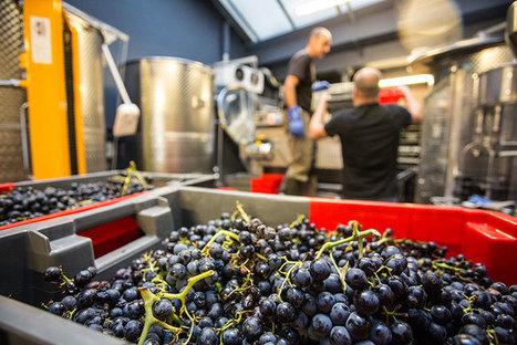 Les Vignerons parisiens ouvrent un chai à Paris | Entreprises de la filière bio | Scoop.it