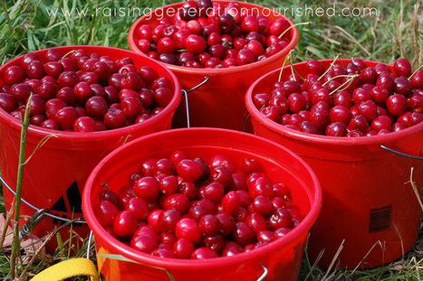 Cherry Vanilla Sorbet :: Dairy Free Option - Raising Generation Nourished | Truly Healthy Recipes | Scoop.it