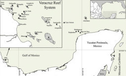 Organizations Defend Veracruz Reef System Against Proposed Port Expansion | EcoWatch | Scoop.it