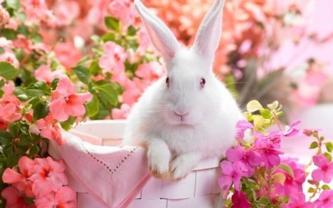 25 Heart Touching Spring Pictures | Life | Scoop.it