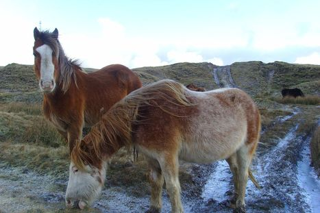 Animal rights campaigners demand action after 14 horses are found dead on ... - WalesOnline | Direitos dos animais | Scoop.it