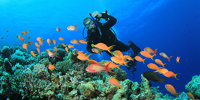 Scuba Diving in Mauritius - Top Level Scuba Dives and Stunning Beaches | Authentic Getaway | Scoop.it