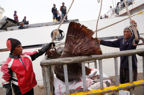 Was Your Seafood Caught By Slaves? AP Uncovers Unsavory Trade | Ethics of eating | Scoop.it