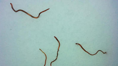 Earthworms rain from sky over Norway | Quite Interesting News | Scoop.it