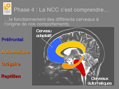 Cerveau - Neuromanagment - Intelligence du stress | Fonctionnement du cerveau & états de conscience avancés | Scoop.it
