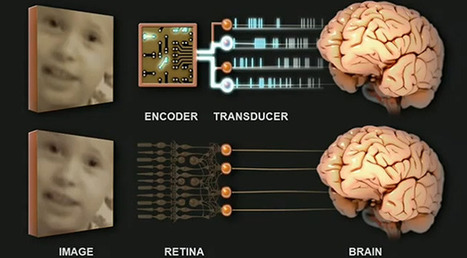 A bionic prosthetic eye that speaks the language of your brain | Oeil bionique | Scoop.it
