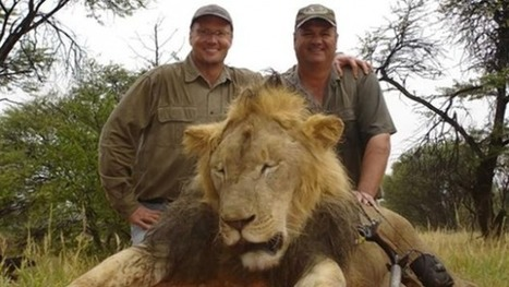 Lion Murderer Walt Palmer Has Done More For Conservation Than You Have | Trophy Hunting: It's Impact on Wildlife and People | Scoop.it