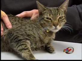 A Cat's Amazing Tale - WDTN | Cats Rule the World | Scoop.it