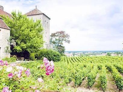 Groupements fonciers viticoles (GFV) : seuil d'exonération d'ISF abaissé | Le vin quotidien | Scoop.it