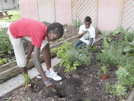 School gardens teach lesson in fighting childhood obesity - Orlando Sentinel | Developing Policies for Improved Access to Healthier Foods | Scoop.it