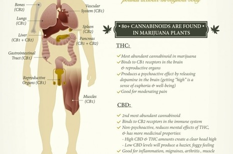 What Cannabis Does To Your Mind & Body Depending On How You Ingest It | Chain Letters from above | Scoop.it
