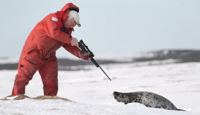 Le Canada donne son feu vert pour tuer 400 000 phoques ! L'autre visage de l'industrie du luxe.