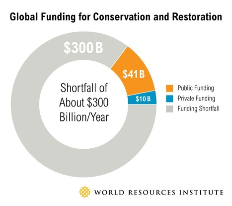 Forest Restoration Gets a Tiny Fraction of the Money It Needs. How to Fill the Gap? | World Resources Institute | Confidences Canopéennes | Scoop.it