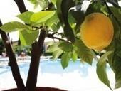 A Food Lovers Guide to Lake Garda | Garda lake | Scoop.it