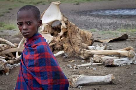 Poaching a prickly problem - The Durango Herald | Serengeti Safari | Scoop.it