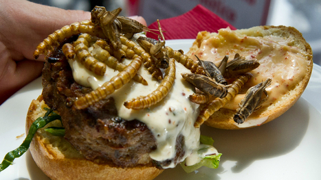 We'll Be Eating a Lot More Bugs in the Future | Big Think | Entomophagy: Edible Insects and the Future of Food | Scoop.it