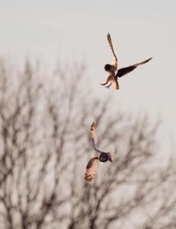 The week in wildlife – in pictures | GarryRogers Biosphere News | Scoop.it