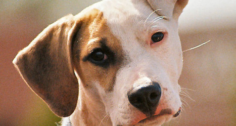 What Is the Best Natural Hypothyroidism Treatment for Dogs | What nobody told you about Hypothyroidism | Scoop.it