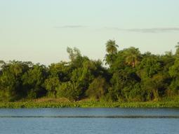 Internationalize the Amazonia? Insights from Cristóvão Buarque...   SutmundoSutmundo   knowledge   Scoop.it