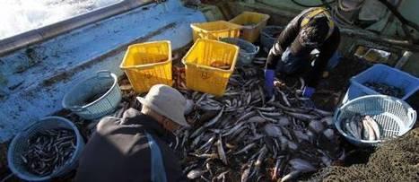 Carrefour renonce à son tour à la pêche profonde | Autres Vérités | Scoop.it