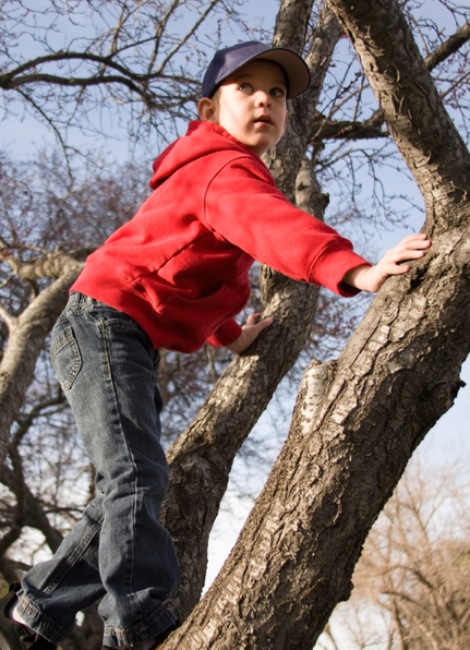 Memory problems? Go climb a tree. | KurzweilAI | The future of medicine and health | Scoop.it