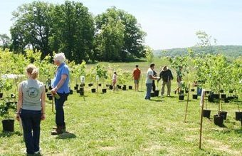Baltimore County Md. Environmental Protection and Sustainability - Big Trees Sale   Suburban Land Trusts   Scoop.it