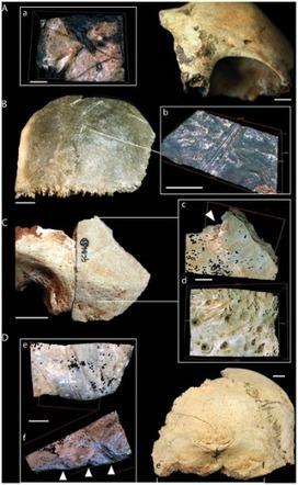 PLoS ONE: Earliest Directly-Dated Human Skull-Cups | Heathers Scoop | Scoop.it