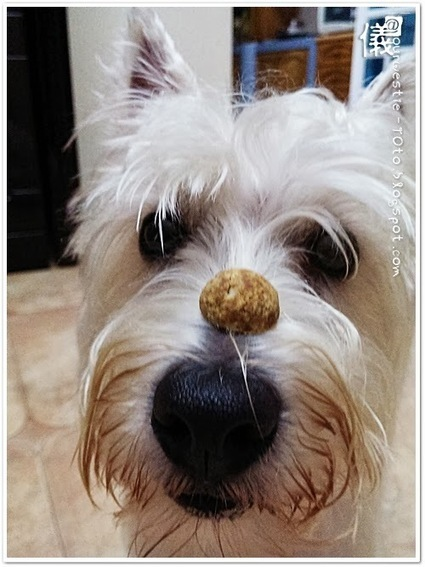 TOto's favorite Peanut Butter honey baby oats biscuit! | Dog Traning | Scoop.it