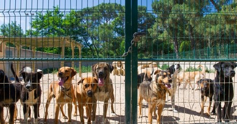 The Most Dangerous Place at Your Dog Park | Ad Canes | Scoop.it