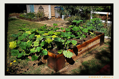 You, Too, Can Be A Backyard Farmer | Gardener's Life | Scoop.it
