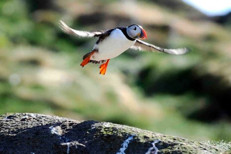 Wales 'missing a trick' by failing to tap into wildlife tourism like Scotland ... - #WalesOnline | CSPB Ornithologist's Alliance. | Scoop.it