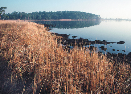 Water Quality Trading in the Chesapeake Bay: Partnerships for Success - USDA.gov (press release) (blog)   Collaborative Networks and Partnerships   Scoop.it