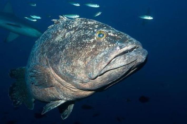 La Nouvelle-Zélande va créer un immense sanctuaire marin | Iles | Scoop.it