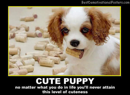 Cute Puppy | Demotivational Posters | Scoop.it