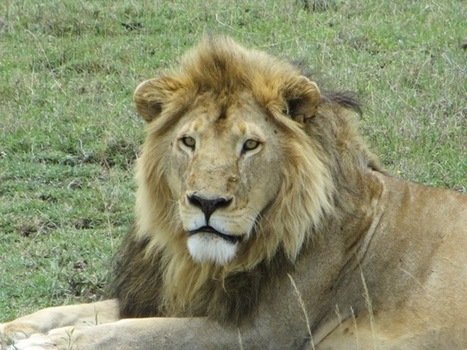 We saw everything…the Big 5, the Ugly 5, some of the Little 5 | A ... | Serengeti Safari | Scoop.it