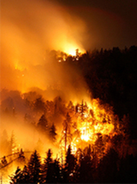 FRYING ON PLANET EARTH: WILDFIRES CONSUMING OUR FORESTS & ALL LIFE WITHIN THEM