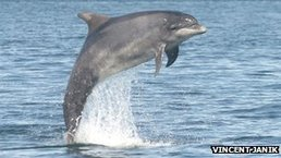 Dolphins 'call each other by name' | Complex Insight  - Understanding our world | Scoop.it
