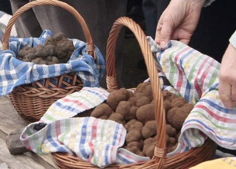 Looking For Truffles - France Today   Travel in france   Scoop.it