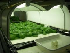 屋上菜園・植物工場など多様なニーズに合わせた貸農園ビジネスを通じてファームセラピーや地域活性化につなげる(ジャスナ) | PlantFactory | Scoop.it