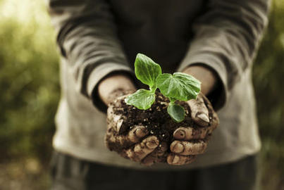 Experts Agree: Organic Farming Is Revolutionary | Right Livelihood: Growing Food | Scoop.it
