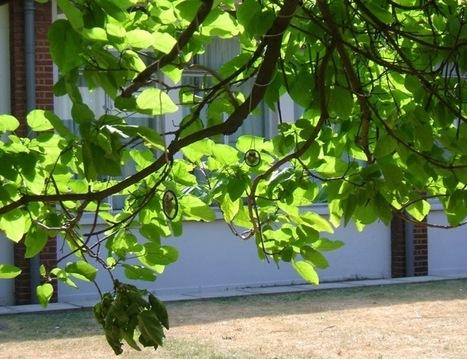Dawn Scarfe - Tree Music | DESARTSONNANTS - CRÉATION SONORE ET ENVIRONNEMENT - ENVIRONMENTAL SOUND ART - PAYSAGES ET ECOLOGIE SONORE | Scoop.it