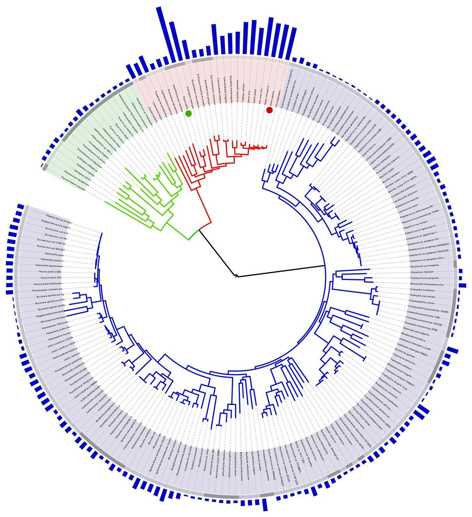 A Genetic Atlas of Human Admixture History | Vi...