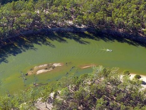 MDB fact: blue-green algae | Murray-Darling Basin Authority | Curtin Global Challenges Teaching Resources | Scoop.it